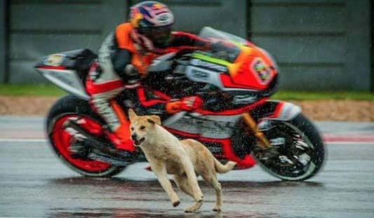 dogs-motogp