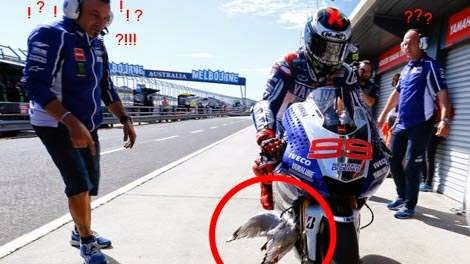 Burung Yang Ditakuti Pembalap MotoGP